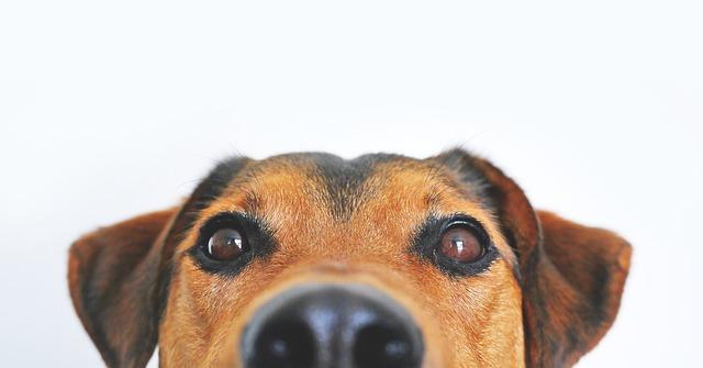 Les mauvaises habitudes des chiens communs (et comment les briser !)